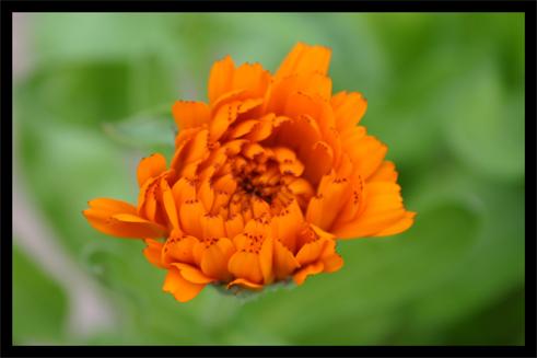 jardin052.jpg