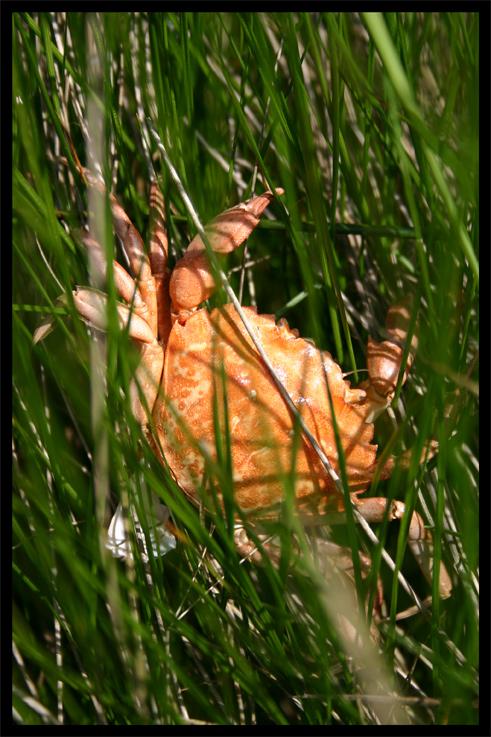 crabesec.jpg
