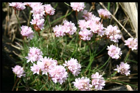 fleursborddemer.jpg