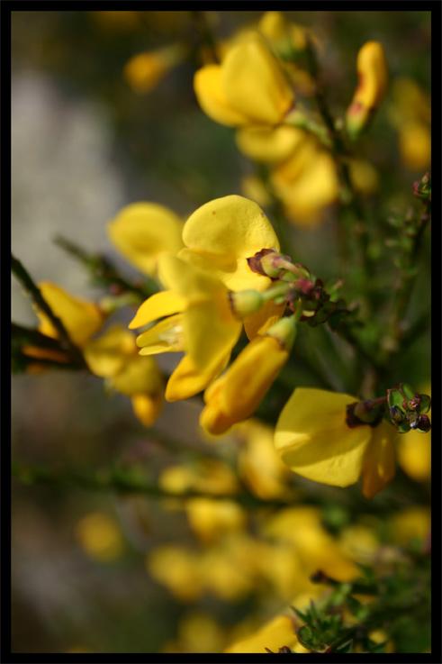 fleursdegenet.jpg