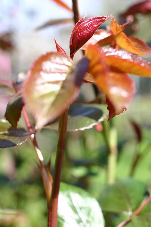 jardin9avril042.jpg