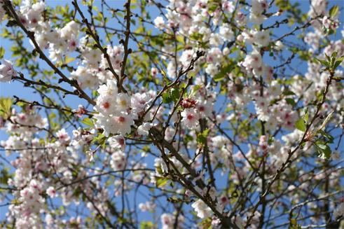 jardin9avril055.jpg