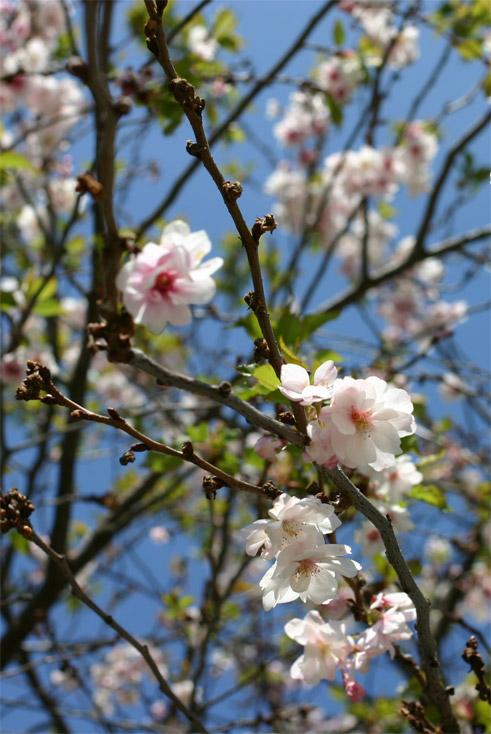 jardin9avril059.jpg