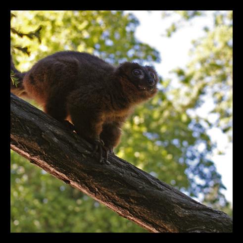 lemuriens.jpg