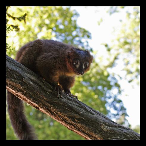 lemuriens1.jpg