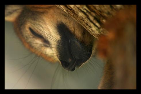 lemurienslemurscouronnes16.jpg