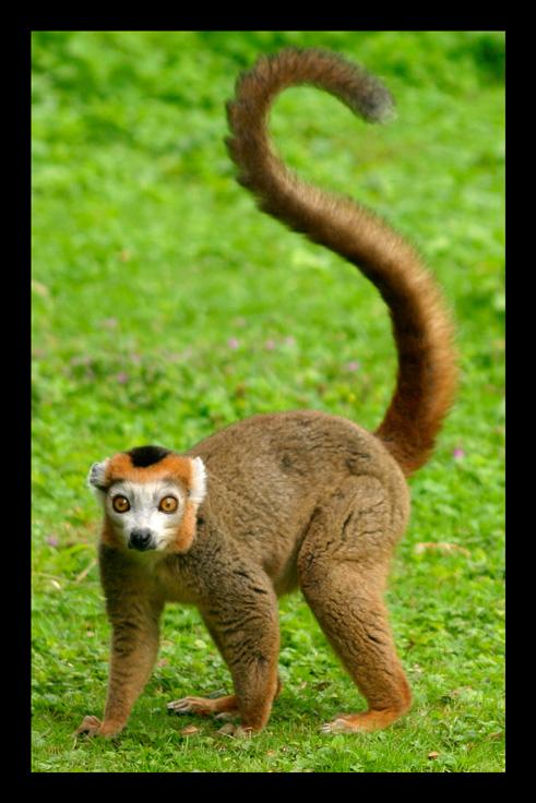 lemuriens25.jpg