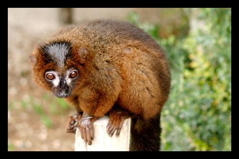lemuriens31.jpg