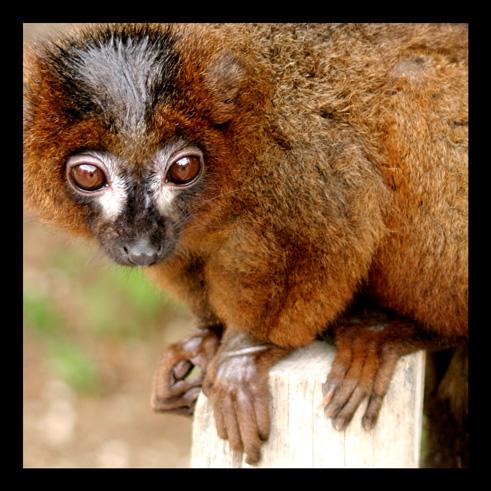 lemuriens312.jpg