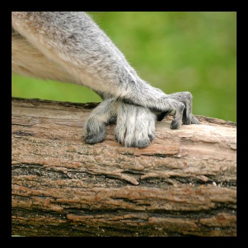 lemuriens44.jpg