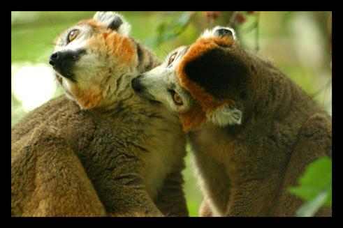 lemuriens98.jpg