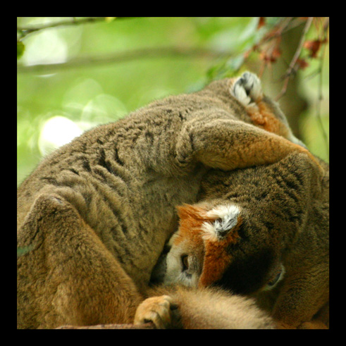 lemuriens99.jpg