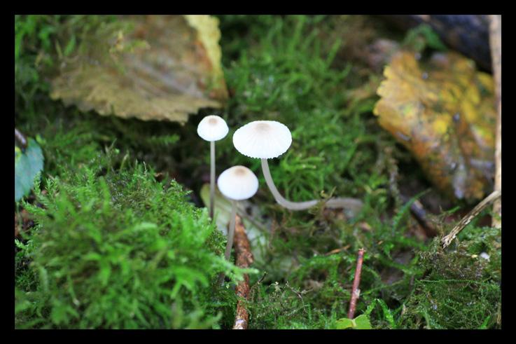 champignons1.jpg