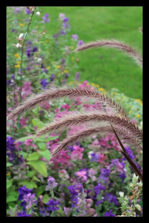 jardinbossuet29.jpg