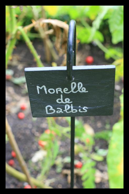 morelle1.jpg