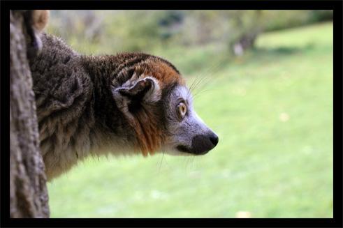 lemuriens22oct3.jpg