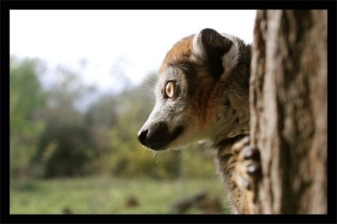 lemuriens22oct4.jpg