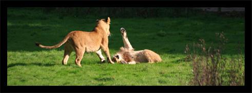 lions22oct.jpg