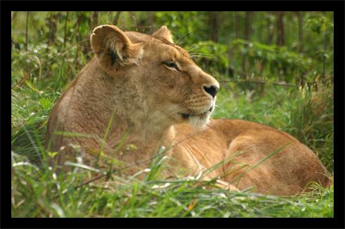 lions22oct3.jpg