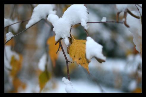 neige11.jpg