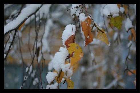 neige12.jpg