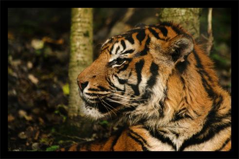 tigres22oct.jpg